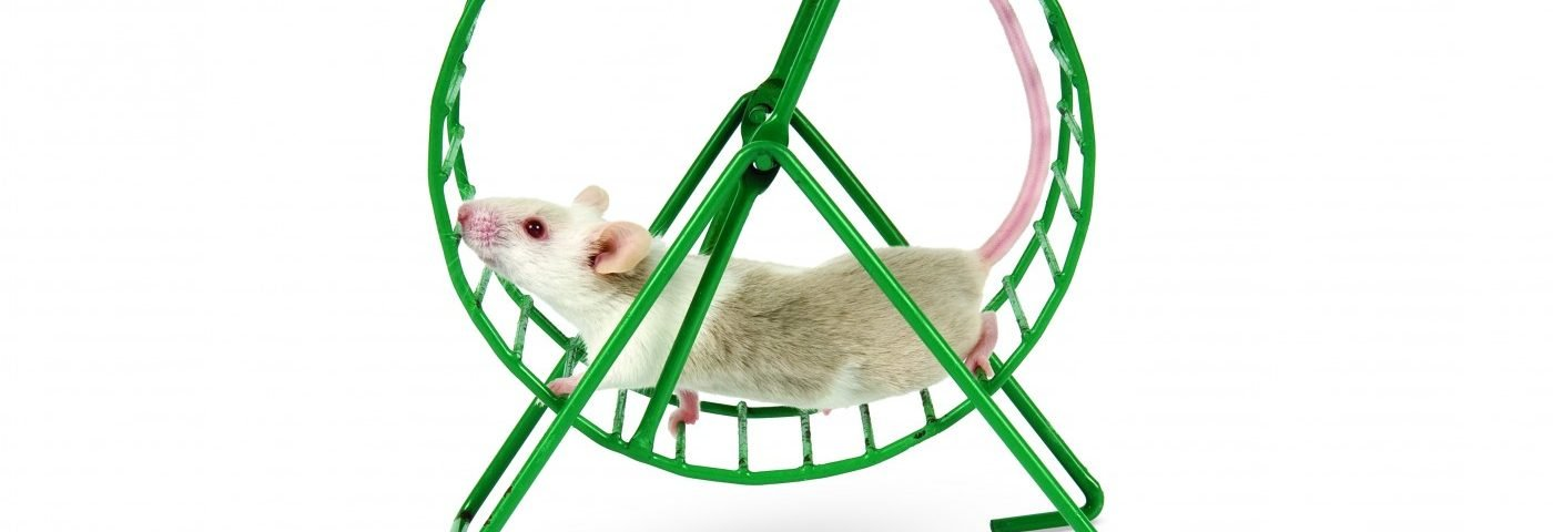 Treadmill Exercise, Electroacupuncture May Benefit Cerebral Palsy Patients, Korean Rat Study Suggests